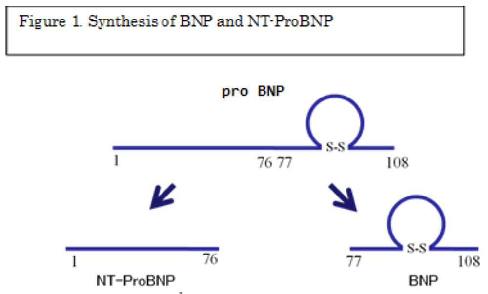 nt pro bnp